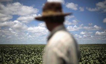 Por clima seco, proyectan fuerte recorte en la producción de soja | Agro