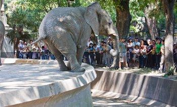 Desmienten los rumores sobre el cierre del zoológico de Palermo | Zoo de palermo