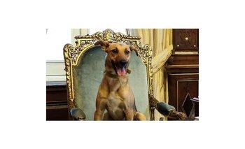 La burla de Horacio González a Balcarce, el perro del PRO | Horacio gonzález