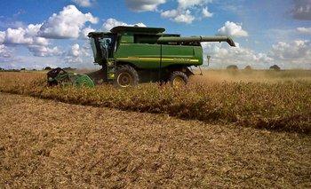 Maíz: se espera una producción de 46 millones de toneladas   Agro