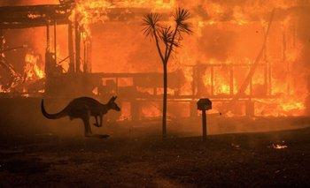 Incendio en Australia: Hay más de 1.000 millones de animales muertos | Medio ambiente