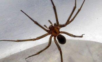 Una niña fue internada por la picadura de una araña rinconera | Salud