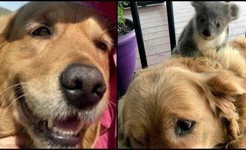 Asha, la perra que salvó a un koala bebé en Australia | Atr