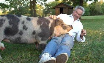 Solá y Pelota contra el empresario que tiró un cerdo a la pileta   Felipe solá