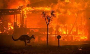 La historia de la foto que recorrió el mundo | Incendio en australia
