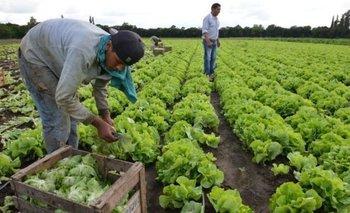 Empleo Rural y AUH: cómo hacer para seguir cobrando con empleo en blanco | Trabajadores rurales