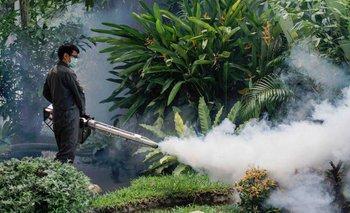 Una epidemia de dengue amenaza a la Argentina | Dengue
