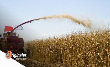 Ventajas y desventajas de que el maíz desplace a la soja en Argentina | Agricultura