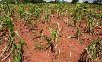 Finalmente, el Gobierno reabrió las exportaciones de maíz | Campo
