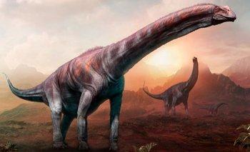 Encuentran un dinosaurio en Argentina: podría ser el más grande de la historia | Dinosaurios