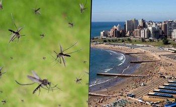 La invasión de mosquitos que preocupa en la Costa Atlántica: a qué se debe | Mosquitos