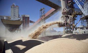 El complejo sojero se reprimariza: ya ni procesan los granos | Soja