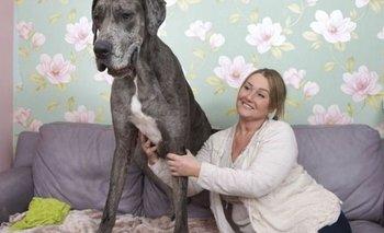 Murió Freddy, el perro más grande y alto del mundo | Mascotas