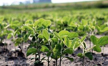 Más de 40.000 pequeños productores de soja ya reciben reintegros | Soja