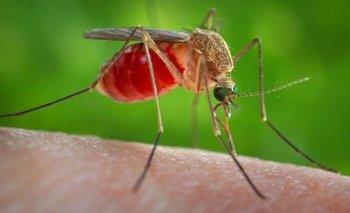 Buenos Aires: ¿por qué hay una invasión de mosquitos?   Clima