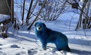 Misterio en Rusia por la aparición de perros de color azul | Fenómenos naturales