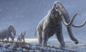Recuperan el ADN más antiguo de la historia en el colmillo de un mamut | Fenómenos naturales