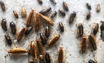 Plagas domésticas: ¿Cómo hacer insecticidas caseros? | Plaga
