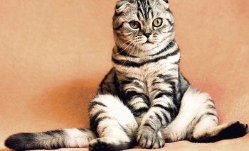 Día del Gato: ¿por qué se celebra en todo el mundo?  | Mascotas