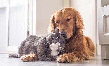 ¿Pueden los perros y gatos contraer coronavirus?   Coronavirus
