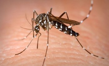 El brote de dengue es el más alto desde la epidemia de 2016   Córdoba