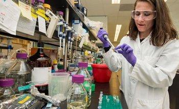 Hacia la cura del coronavirus: los tratamientos en estudio | Pandemia
