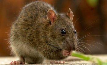 Anmat prohibió un insecticida y veneno para ratas | Anmat