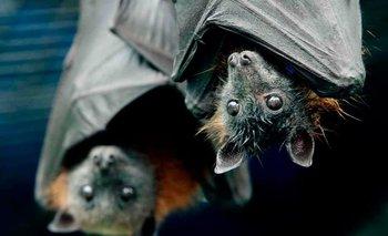 Por miedo al coronavirus, casi queman 200 murciélagos en Perú | Coronavirus