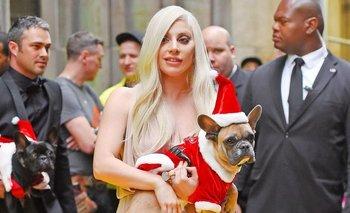 Acusan a Lady Gaga de no pagar la recompensa por el rescate de sus perros | Hollywood