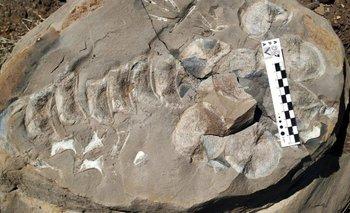 Rescataron fósiles de 140 millones de años de antigüedad | Neuquén