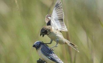 Un pájaro de los Esteros del Iberá sorprende a la ciencia mundial | Fenómenos naturales