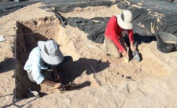 Momias de guacamayos en Atacama sorprenden a los especialistas | Animales