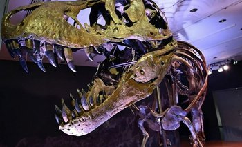 Un temible asesino del Cretácico fue descubierto en la Patagonia | Dinosaurios