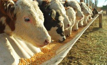 Agricultura asegurará abastecimiento de maíz a productores de carne | Precio de la carne