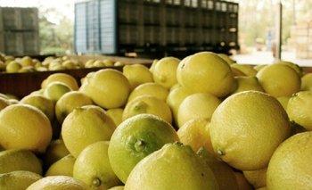 Después de seis años, EE.UU levantó la restricción a los limones argentinos   Trump presidente
