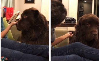 VIRAL: Este perro no quiere perdonar a su dueña | Bananas