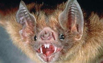 Temor por la invasión de murciélagos en la Ciudad | Coronavirus