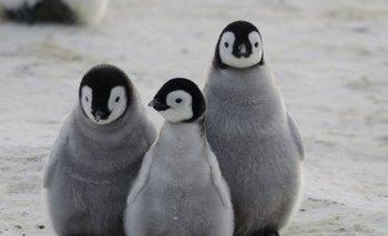 Un pingüino violó la cuarentena y fue visto en Miramar | Video