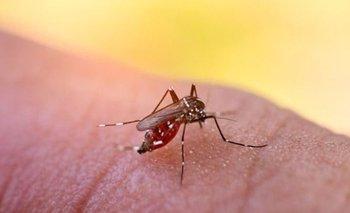 Qué es el dengue: síntomas, tratamientos y causas | Consejos de salud