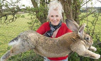 Se perdió el conejo más grande del mundo: la impresionante recompensa | Animales