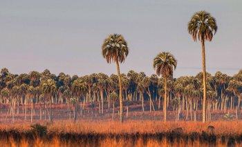 Cifras alarmantes: Un retroceso en la lucha contra la contaminación | Ecología