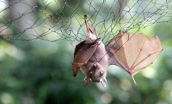 Futuras epidemias: por qué hay que cuidar la salud de los animales | Estudio veterinario