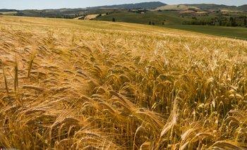 En medio del pedido de Carrió, el campo comenzó a retener cosecha de trigo | Campo