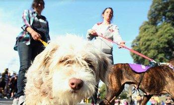 Una iniciativa para las mascotas de gente con COVID-19 | Coronavirus en argentina