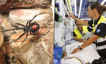 Quisieron ser 'Spider-Man', los picó una araña y casi mueren | Internacionales