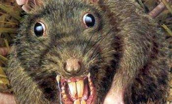 Pánico por una próxima invasión de ratas caníbales en EE.UU | Coronavirus