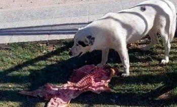 El escándalo detrás de la perra que se comió el lechón de los concejales | Curiosidades