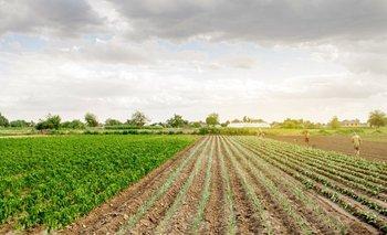La demanda en el mercado de agroinsumos mejora sus índices | Economía