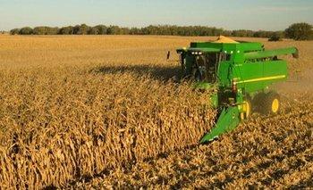Solo cinco empresas concentraron el 65% de las exportaciones de granos  | Agro
