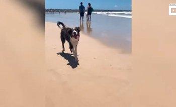 Video viral: la emotiva reacción de un perro ciego al conocer el mar | Curiosidades
